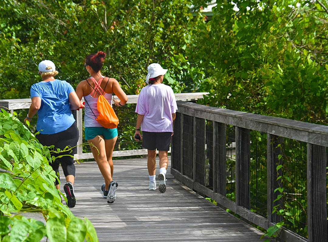 Early risers use the boardwalk at Fred W. Coyle Freedom Park for exercise. The 3,500 feet trail winds through vegetation included towering cypress, pond apple and mangroves as well as occasional sightings of wildlife.