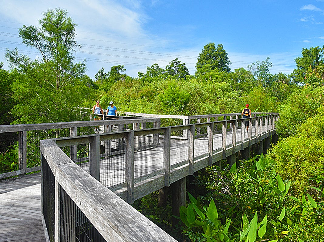 The Fred W. Coyle Freedom Park boasts a 3,500 foot boardwalk extending over the eastern side of the park and the portion belonging to Conservation Collier. Trails punctuated by six lookout pavilions wind around the lakes in the western side of the park.