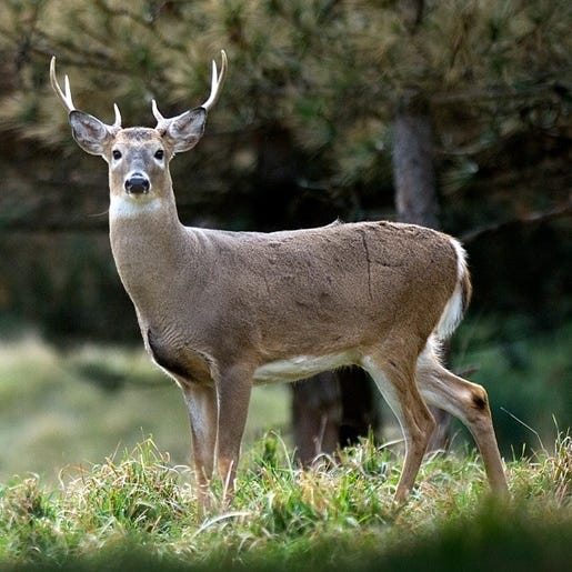 Hunter numbers continue decline in Michigan