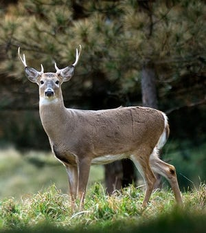Conservation officers were busy with violations the first days of the firearms deer season