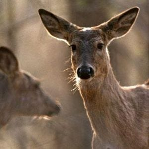 A deer hunter was injured after falling from a tree stand in Chesterfield Township.