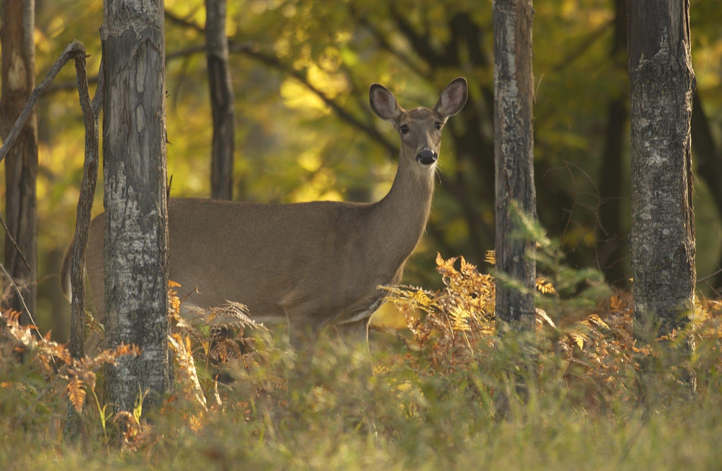 Opening Day of firearms deer season is Thursday.