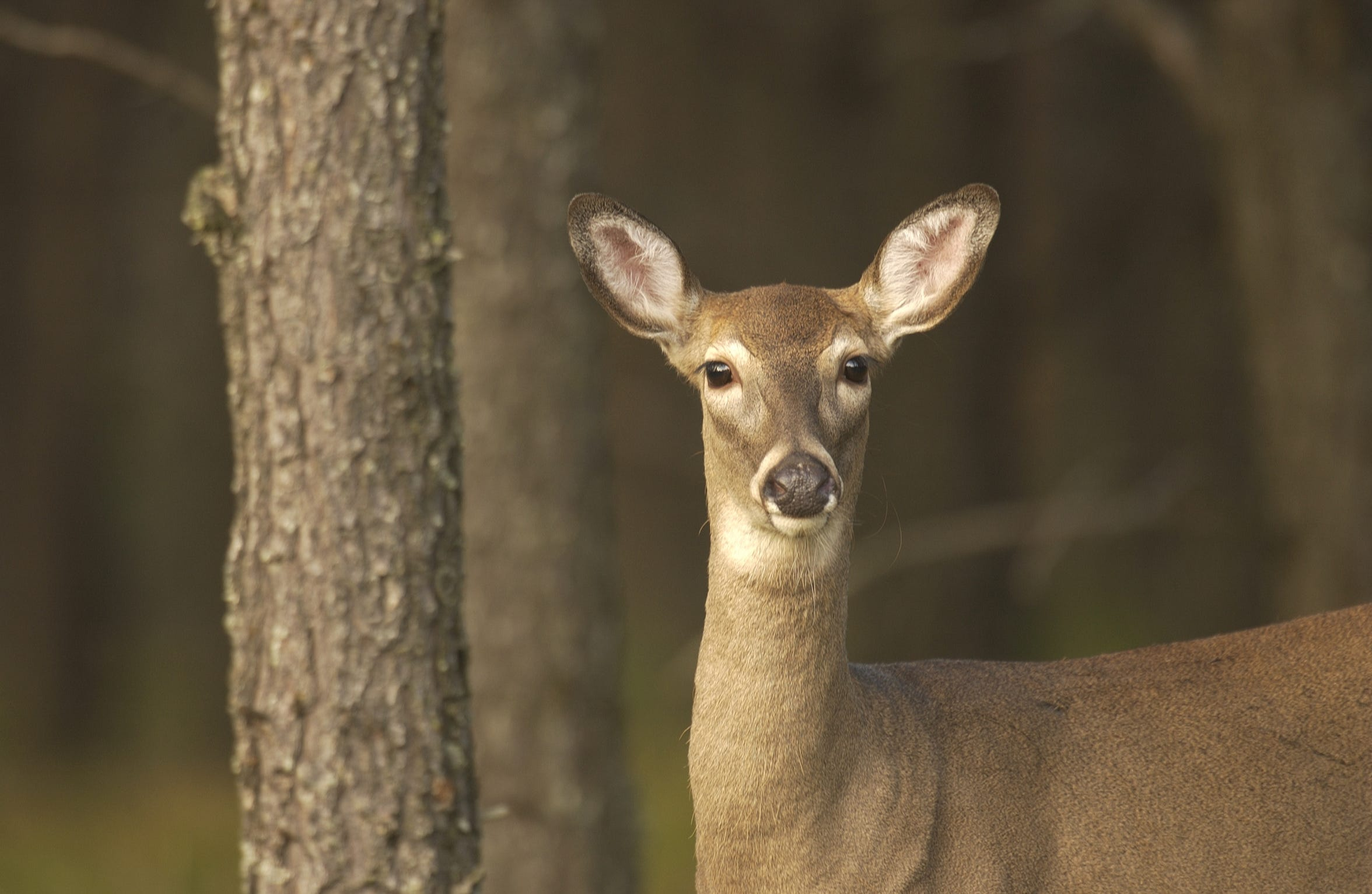 Opening Day of the 2018 firearms deer season is Thursday.