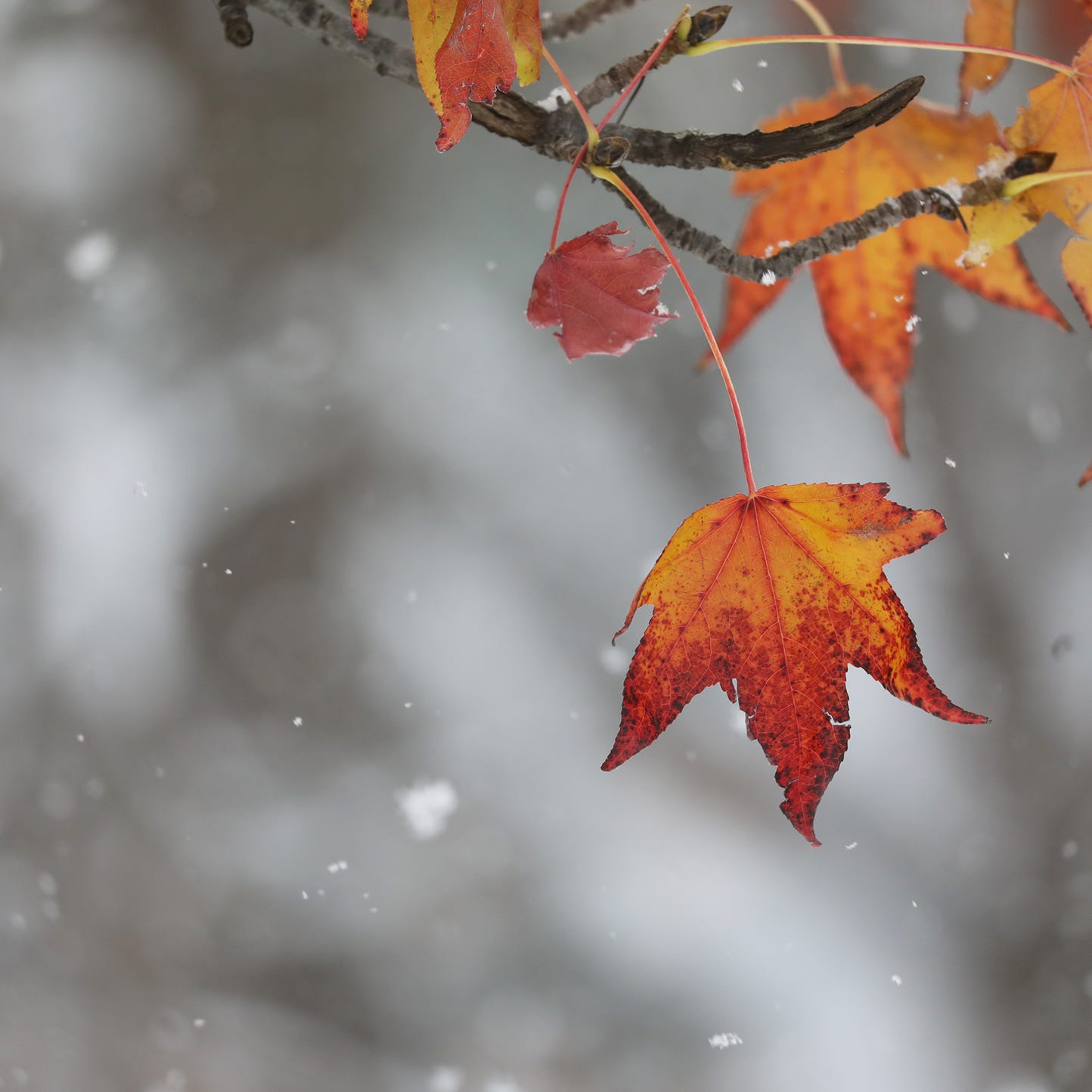 Calendar says it's mid-November, but the weather isn't listening. Here's what to expect