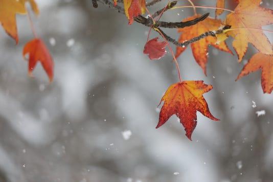 Snowflakes Fall Leaf