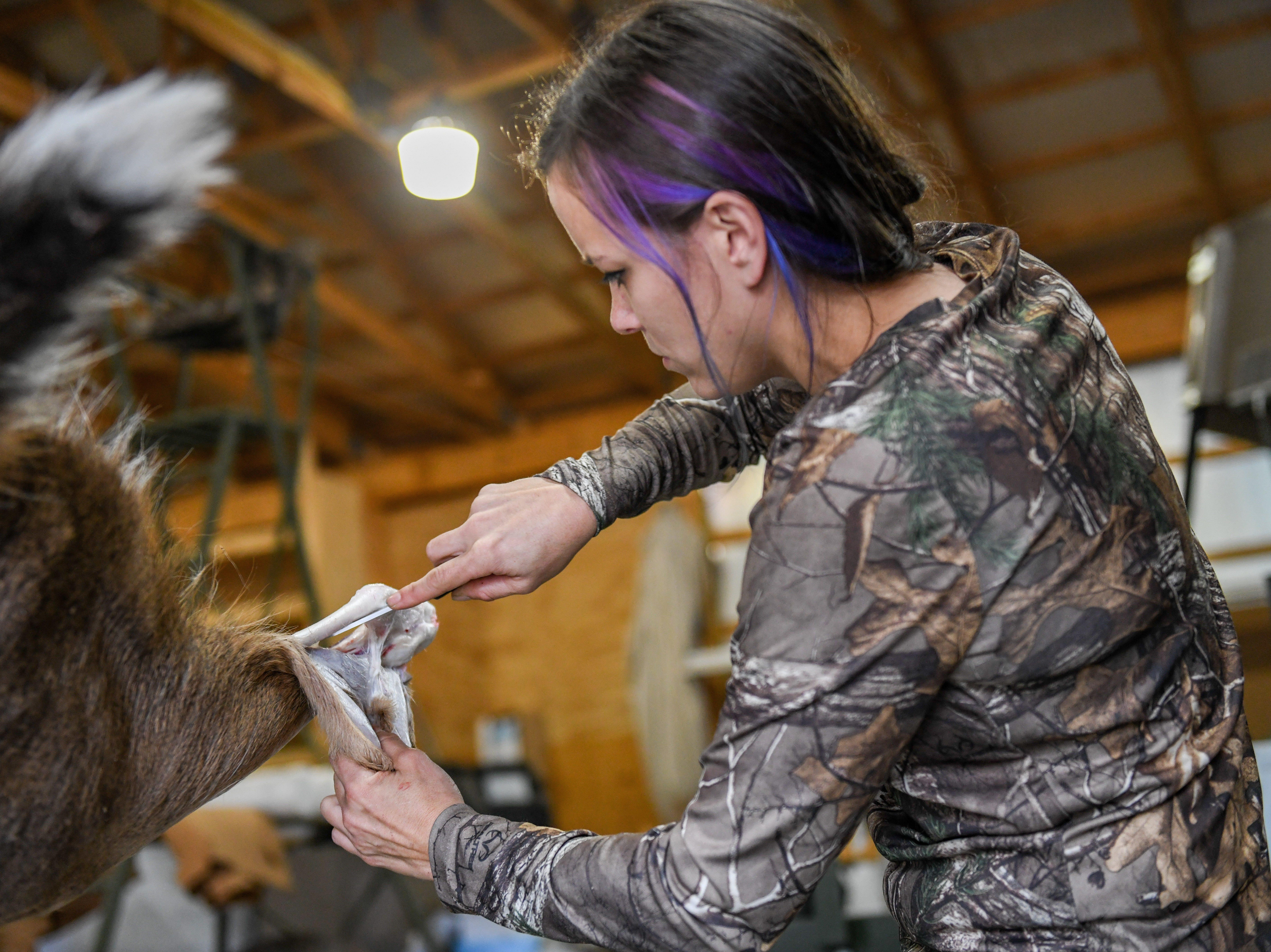 Maribeth Kulynycz helps to butcher a deer in Mardela Springs on Tuesday, Nov 6, 2018.
