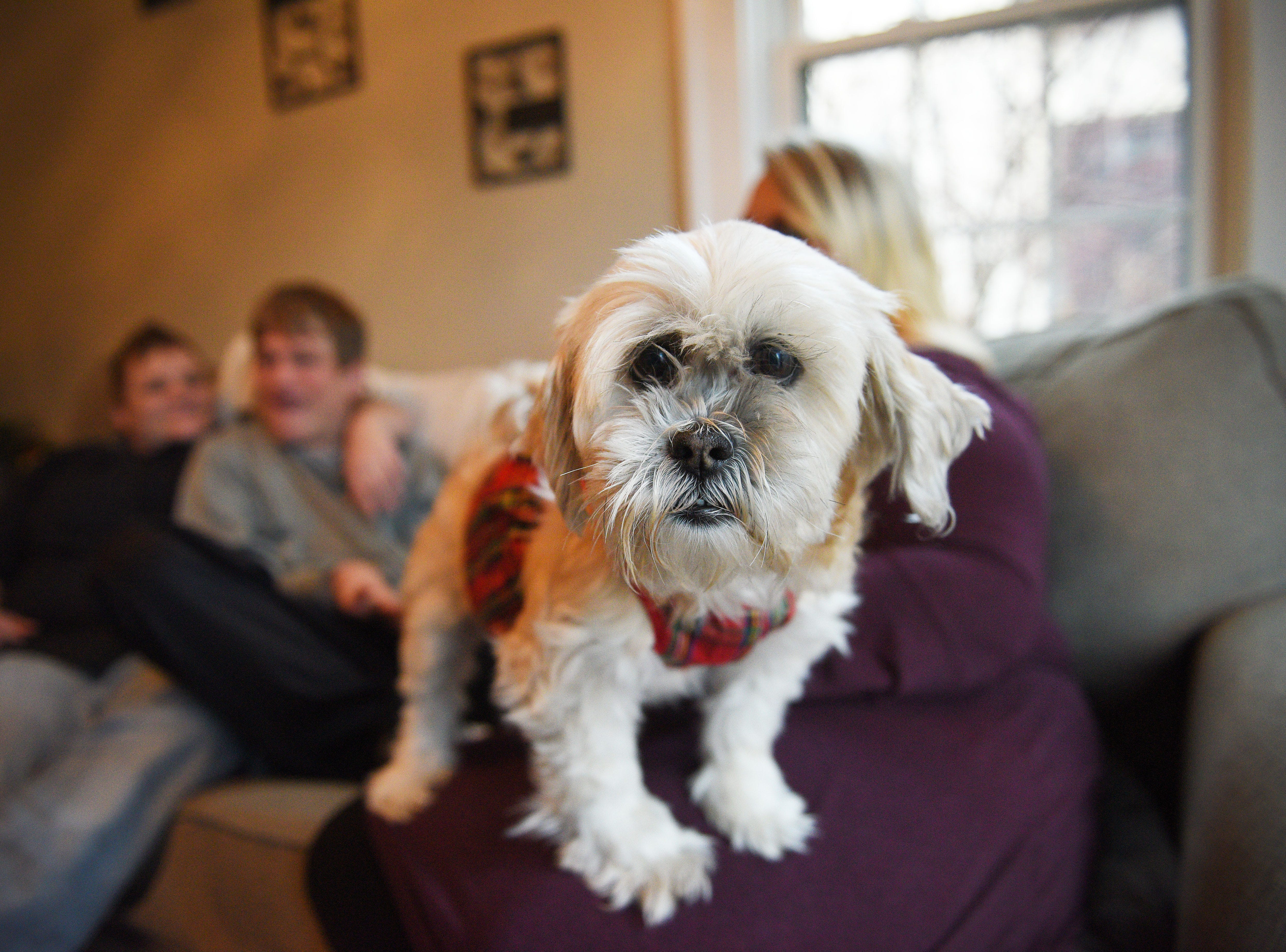 Chu Chi keeps an eye on visitors at Ben Graff's home Wednesday, Nov. 7, in Sioux Falls. Graff lives with Shared Living Provider Kayla Harris and roommate Jenna Askelson. Harris and Askelson provide care for Ben daily so that he can live independently from his parents Debbie and Neil Graff.