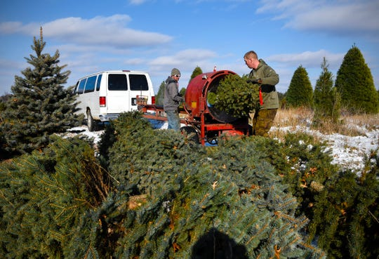 Justin Zeroth and Adam Thomas, Jan's Christmas Trees, bale trees to be shipped Tuesday, Nov. 13, near Clear Lake.
