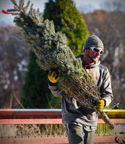 Justin Zeroth, Jan's Christmas Trees, stacks trees to be shipped Tuesday, Nov. 13, 2018 near Clear Lake.
