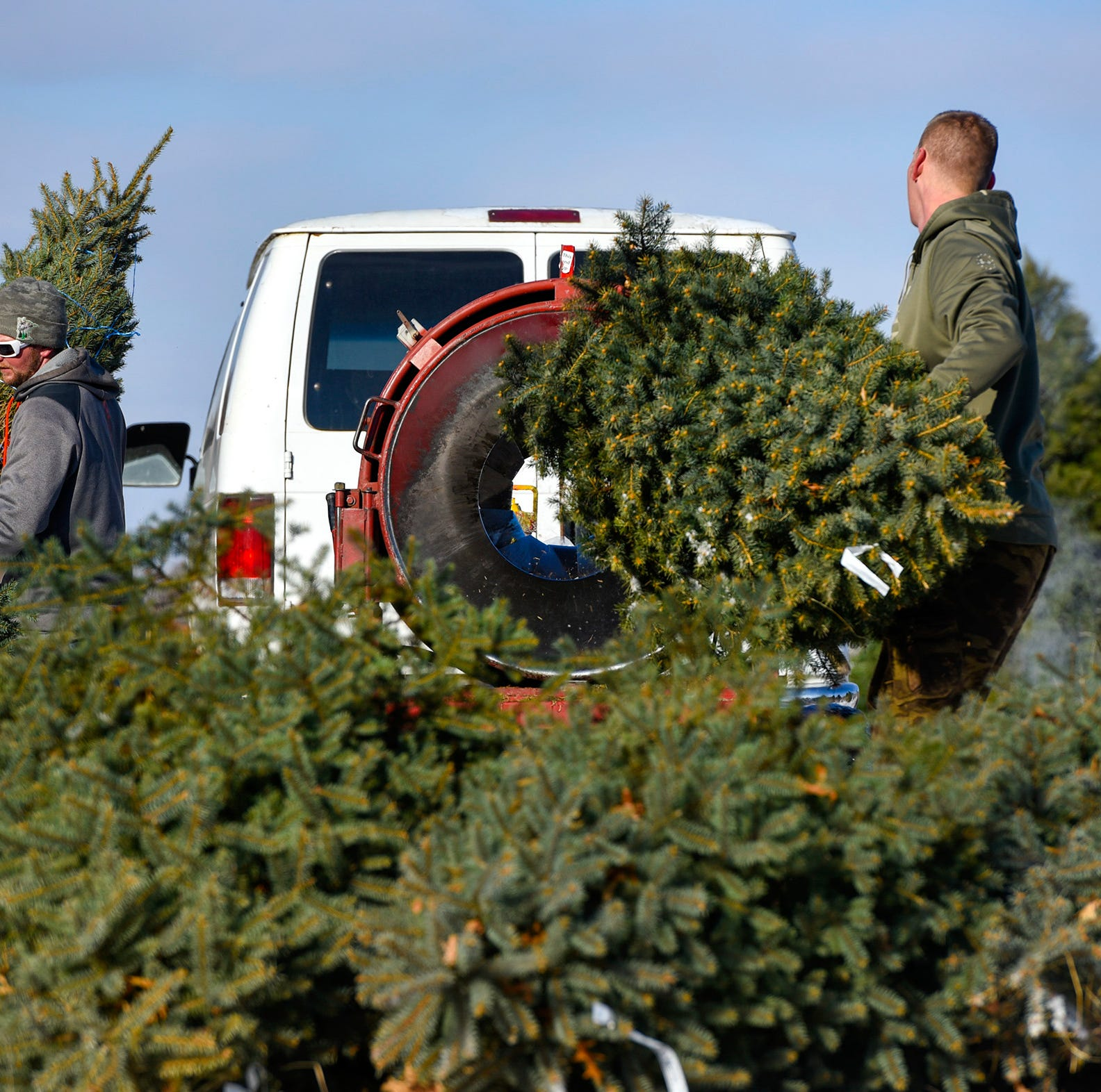 Here's where you can cut your own Christmas tree locally