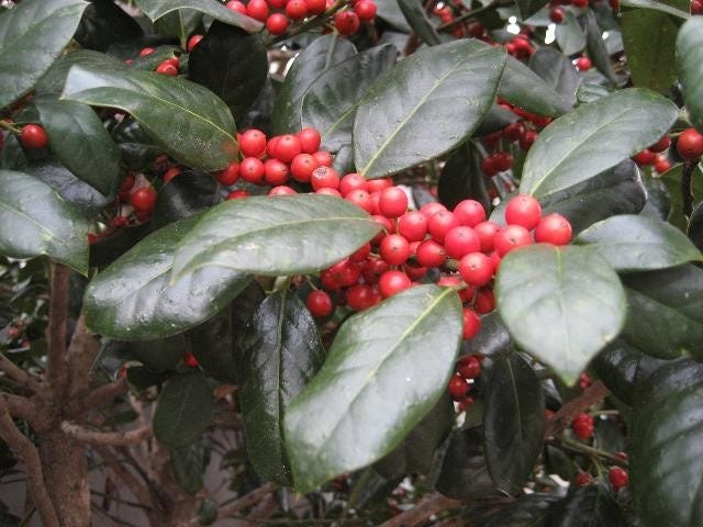 About Those Red Berries Good Bad And Ugly