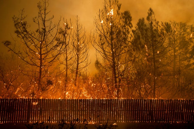 Flames climb trees as the Camp Fire tears through Paradise on Nov. 8.