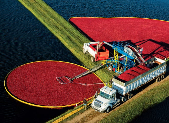Cranberry production shown in 2018 in Warrens, Wis., the home of the Warrens Cranberry Festival and many cranberry growers.