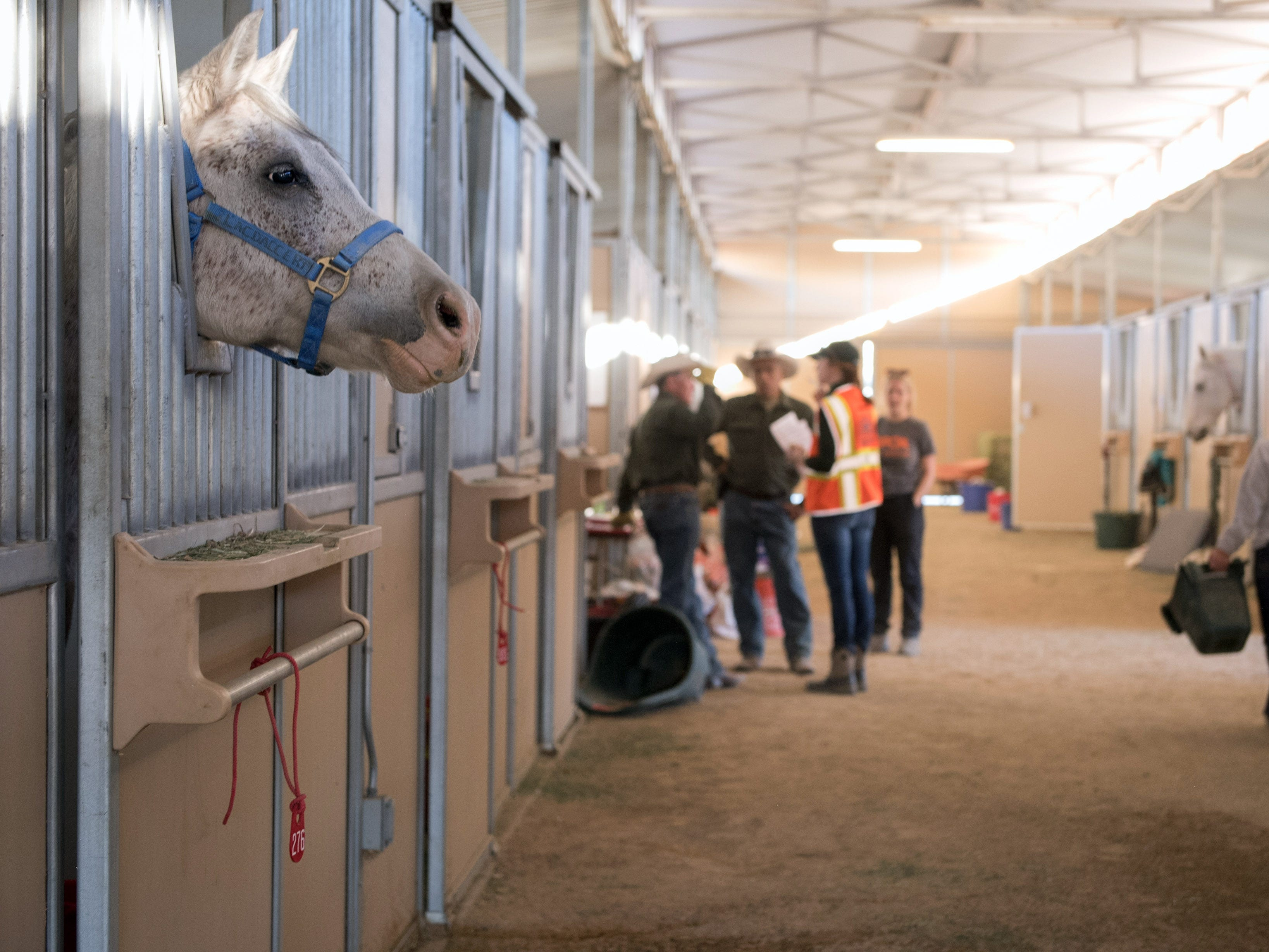 Horses displaced by the Woolsey Fire are kept in stalls on the campus of Pierce College in Woodland Hills, Calif. on Nov. 12, 2018.