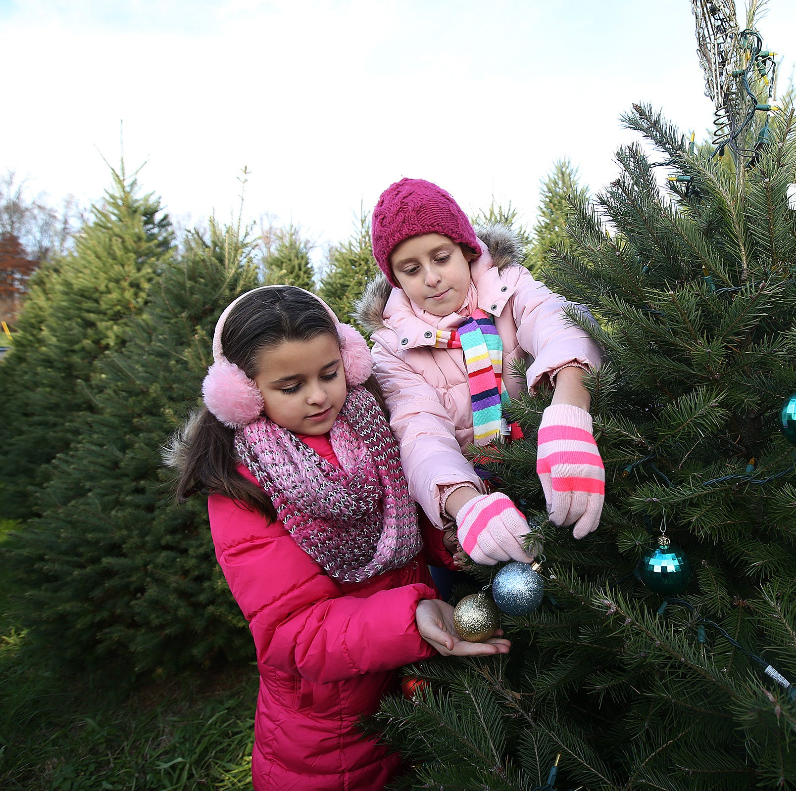 The heartwarming story of two illuminated Christmas trees on a Middletown hillside