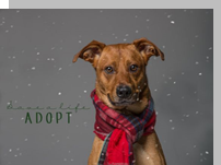 Gulf Coast Humane Society offers family portraits with your pet for the holidays