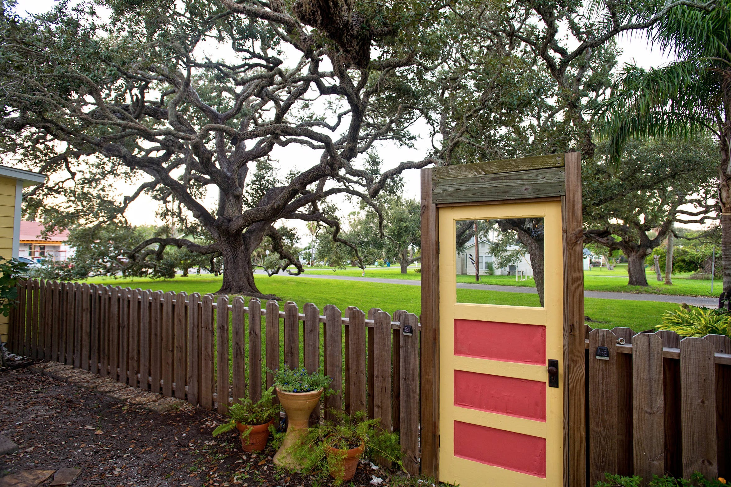 A huge ancient oak tree commands an entire corner lot on the property