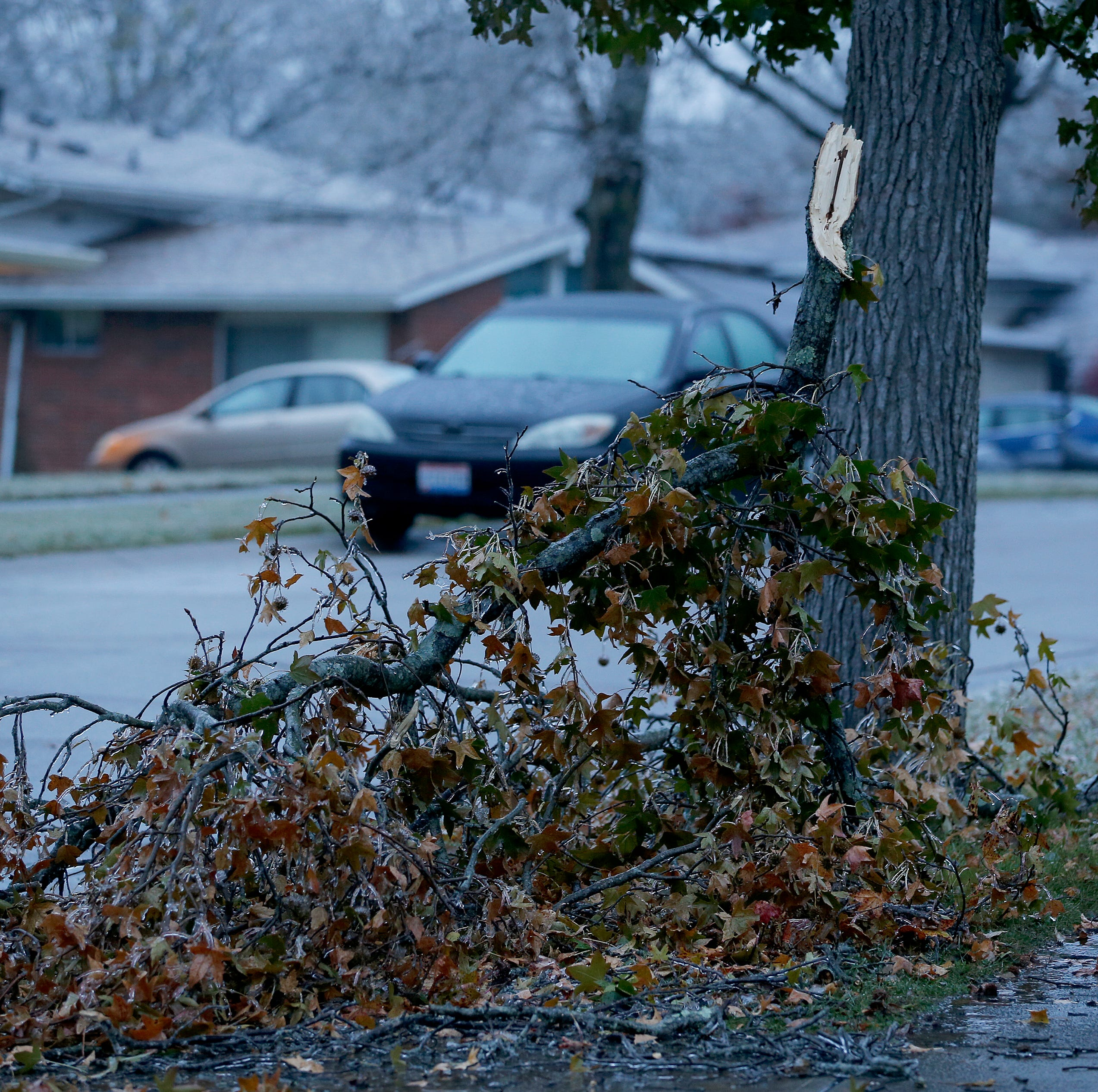 Cincinnati: Here's what to do about that ice-damaged tree