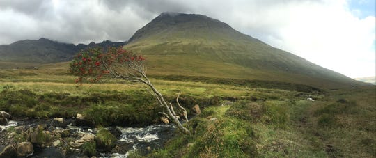 A windblown tree grows along the Fairy Pools.