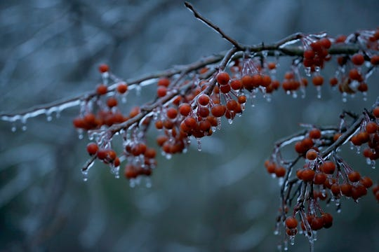 The overnight ice storm left a beautiful scene in Forest Park on Thursday. An ice storm warning is in effect for the region with ice accumulations of up to three-tenths of an inch expected.