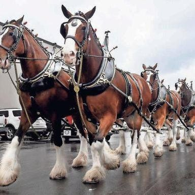 Budweiser Clydesdales coming to Greenville