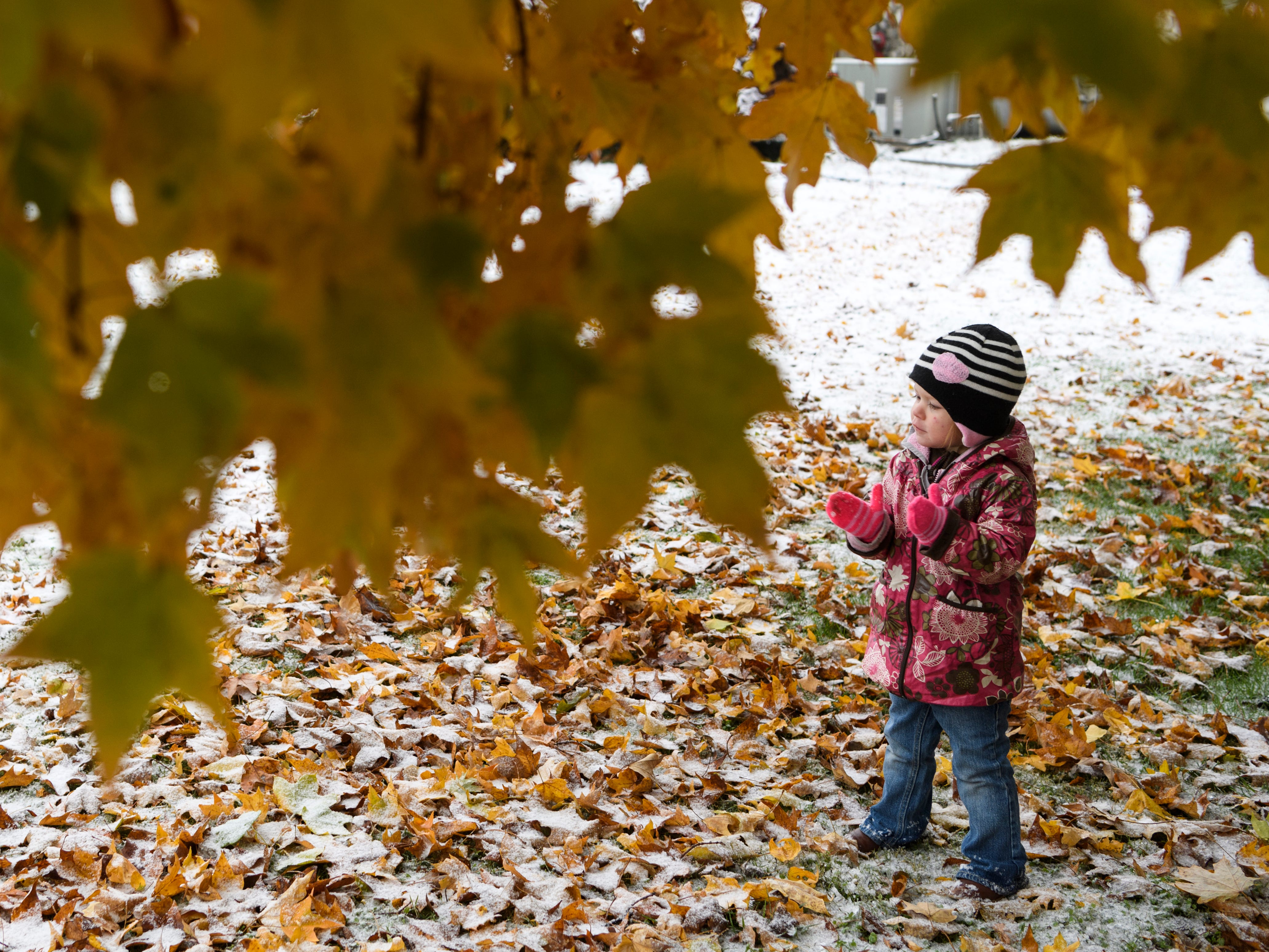 """London Phelps, 2, claps snow off of her gloves during a walk to the Henderson County Public Library with her sisters, Emmy, 4, and Harper, 2-months-old, and mother, Whitney Phelps, in downtown Henderson, Ky., Thursday, Nov. 15, 2018. """"We thought we would go to the library to see if we could check out the movie 'Frozen' and watch it at home with some popcorn during our snow day,"""" Whitney said."""
