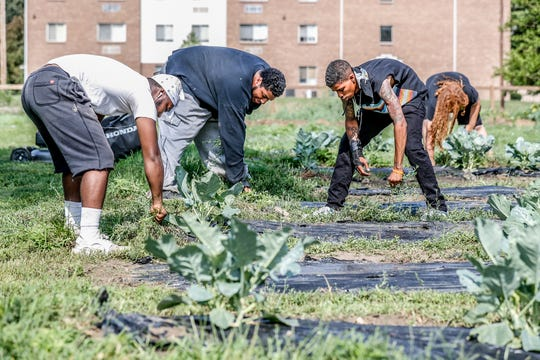 Left to right, Craig Johnson, Fred Rustin, Josua Miller, and Zion Cosby, members of the Flanner House F.E.E.D. program, (Farming, Education, Employment, and Distribution) pull weeds and tend the Flanner House Farms garden on Wednesday, July 11, 2018. The program for those age 16-24, not in school, unemployed, or in the legal system provides a way to learn life skills and become members of the local food economy.