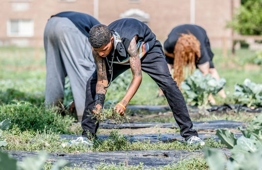 Josua Miller, center, a member of the Flanner House F.E.E.D. program, (Farming, Education, Employment, and Distribution) pulls weeds and tends the Flanner House Farms garden on Wednesday, July 11, 2018. The program for those age 16-24, not in school, unemployed, or in the legal system provides a way to learn life skills and become members of the local food economy.