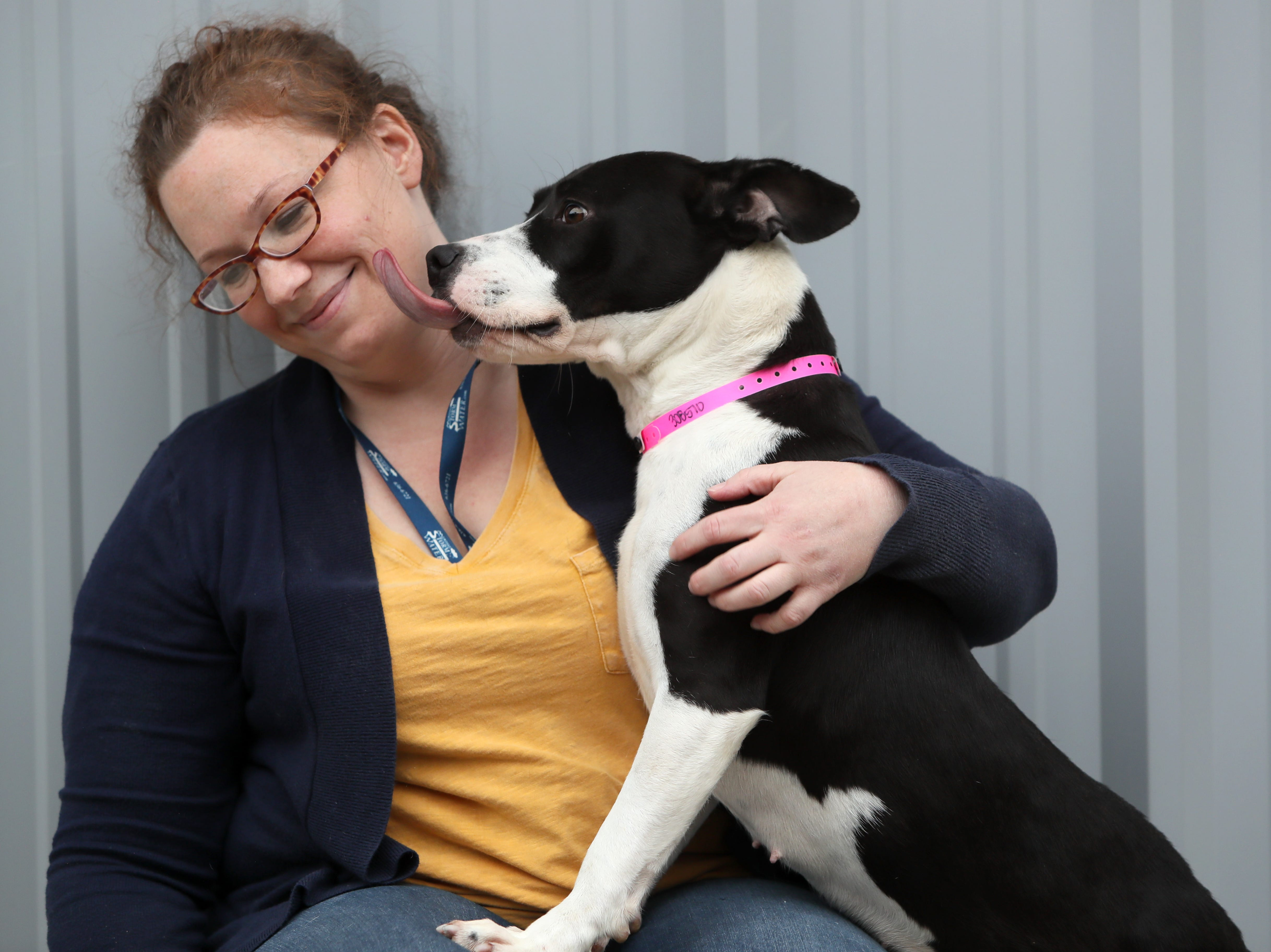 Jada, a 2-year-old female, licks Community Engagement Specialist Katie Pemberton at the Memphis Animal Services on November, 14, 2018. Jada is a part of the dog foster program that aims to find temporary placement for dogs selected each week that are in the at-risk population of the shelter.