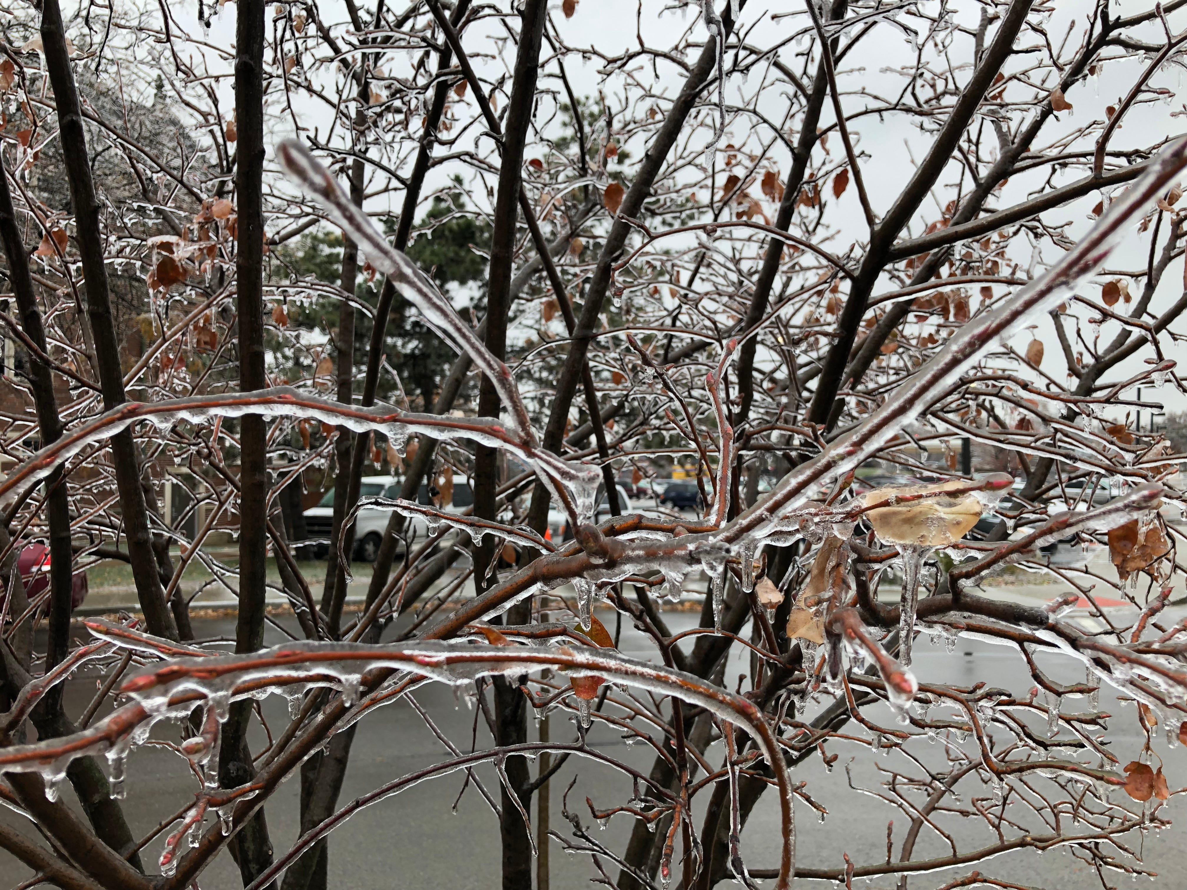 A tree on the IU Health Ball Memorial Hospital campus Thursday morning after an overnight ice storm.