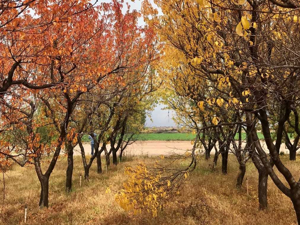 Fall colors: The deciding factors for deciduous trees