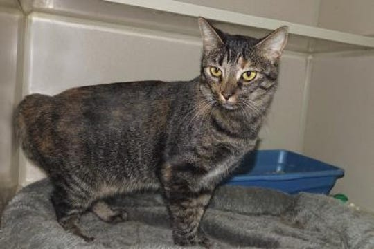 Maple Syrup is 2-years-old and extremely affectionate.