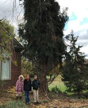The Duffina children -- Katlyn (6), Jake (8) and Karsten (6) -- stand near their now-famous tree before it was hauled to Detroit.