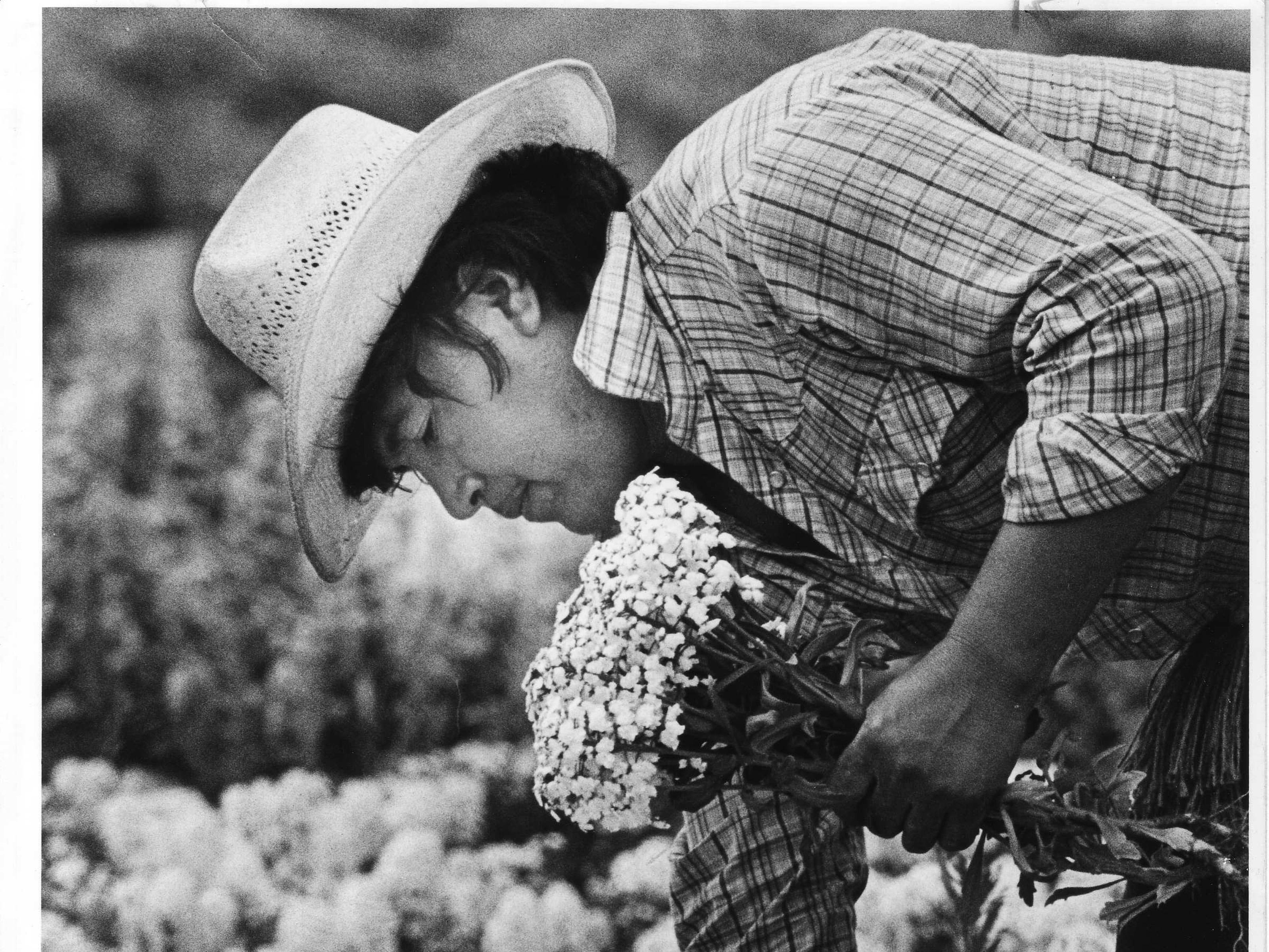 A man works in a Japanese flower garden along Baseline Road in Phoenix in 1982.