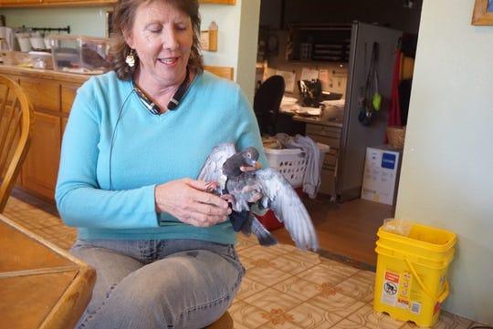 Fallen Feathers Director Jody Kieran dresses a lost pigeon in the bedazzled flight suit it was found in.