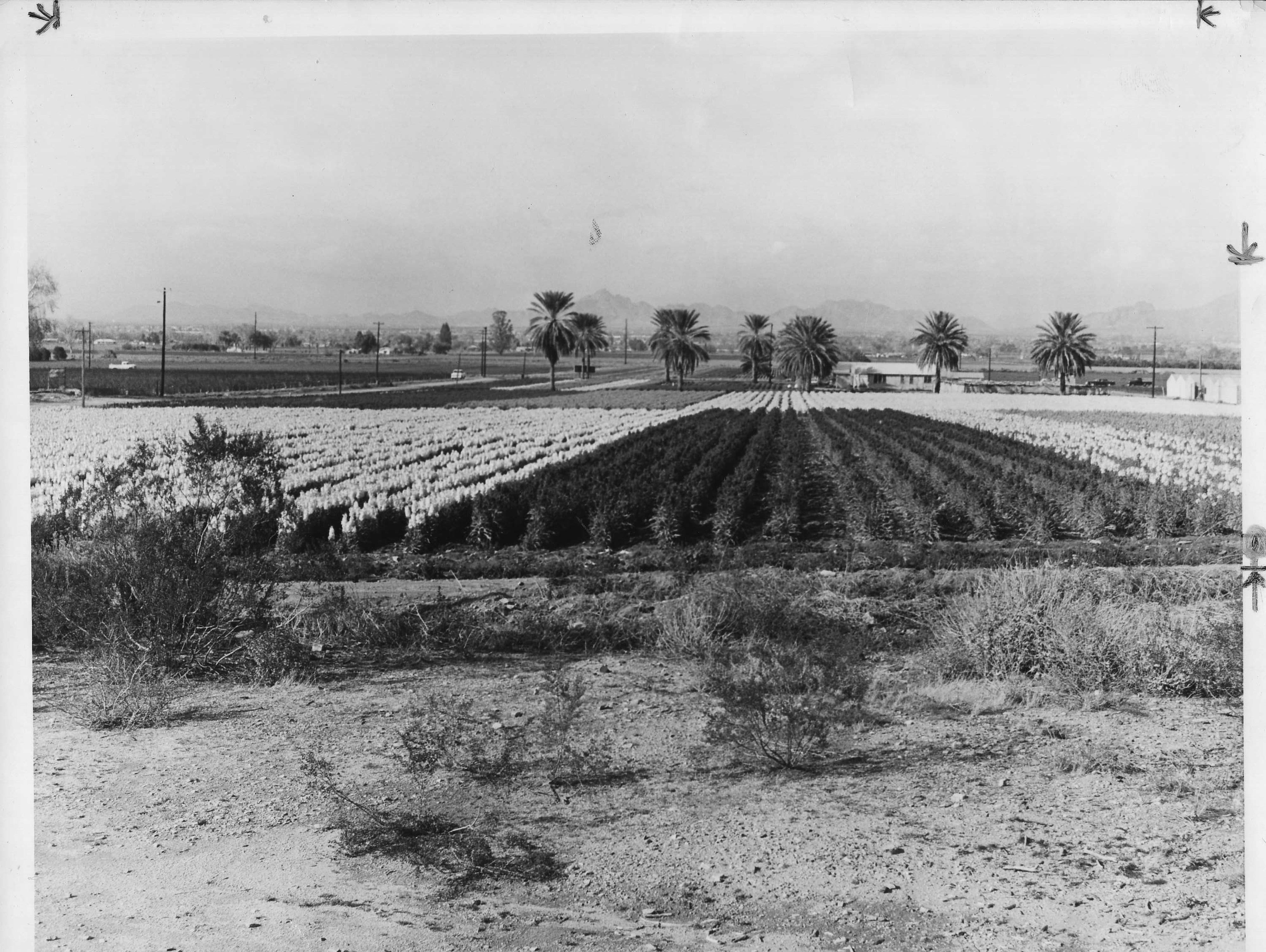 A Japanese flower garden is seen in Phoenix in 1964.