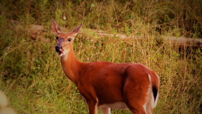 70bec6d4 Nothing like deer hunting club