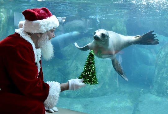 Mary Lou, the sea lion, tells Santa Claus her Christmas wish at the Seneca Park Zoo Breakfast with Santa in 2017.