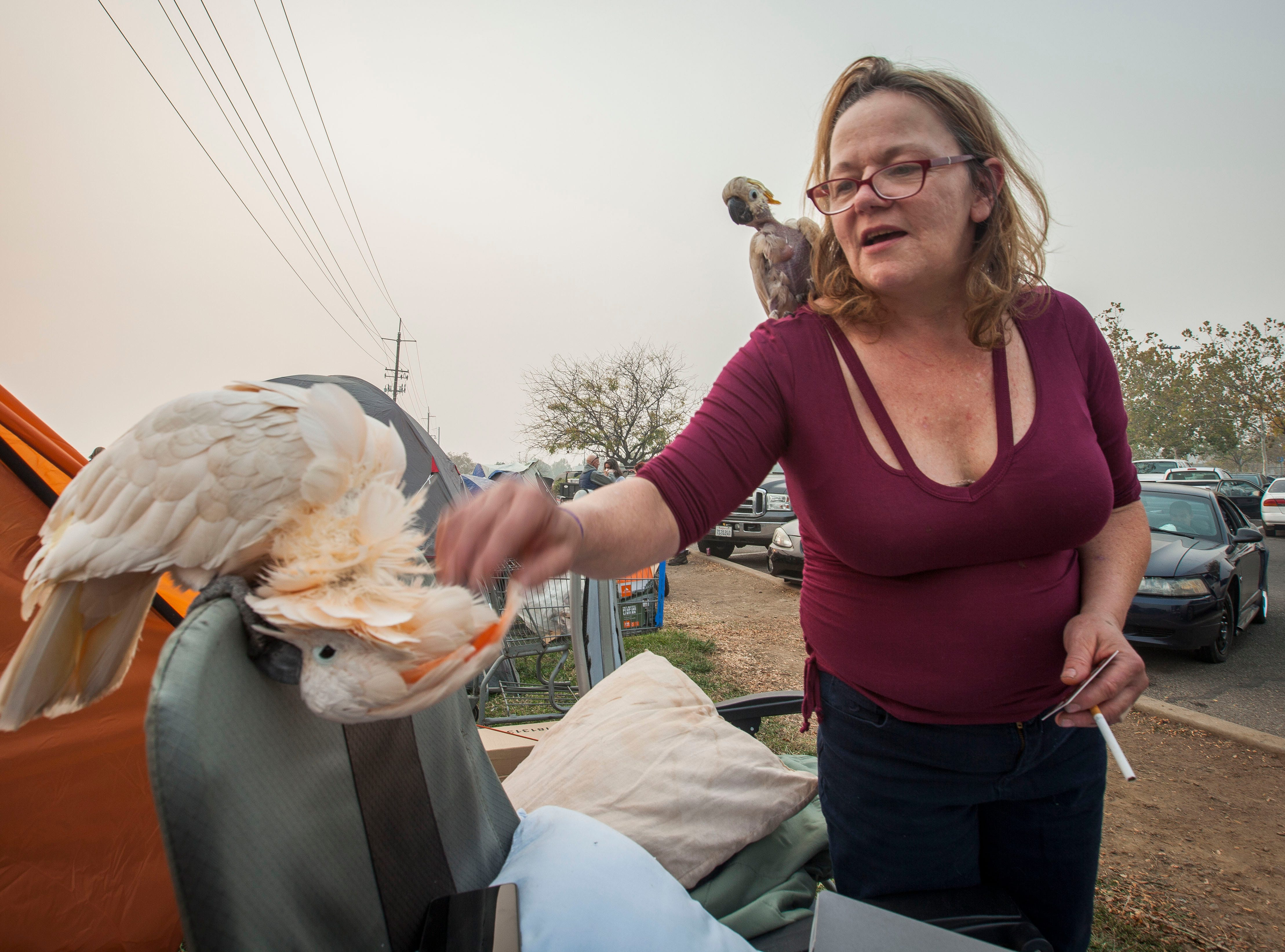 Suzanne Kaksonen, of Paradise, rubs the neck of Buddy, while her other bird Lady Bird sits on her shoulder next to their tent in a make-shift compound next to the Walmart in Chico, CA, Wednesday, November 14, 2018. Kaksonen lost her home in the Camp Fire but feels blessed to have saved her dogs and her two 31-year-old cockatoos.