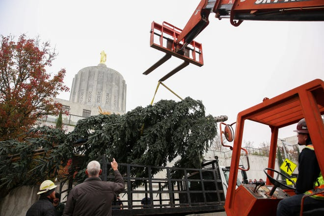 Crew members from the Oregon Department of Forestry assemble their annual Christmas tree at the Oregon State Capitol on Thursday, Nov. 15, 2018. The 30-foot noble fir is from Clatsop State Forest.