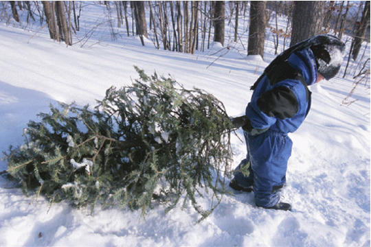 Officials recommend cutting down your tree earlier in the season when the weather is better.