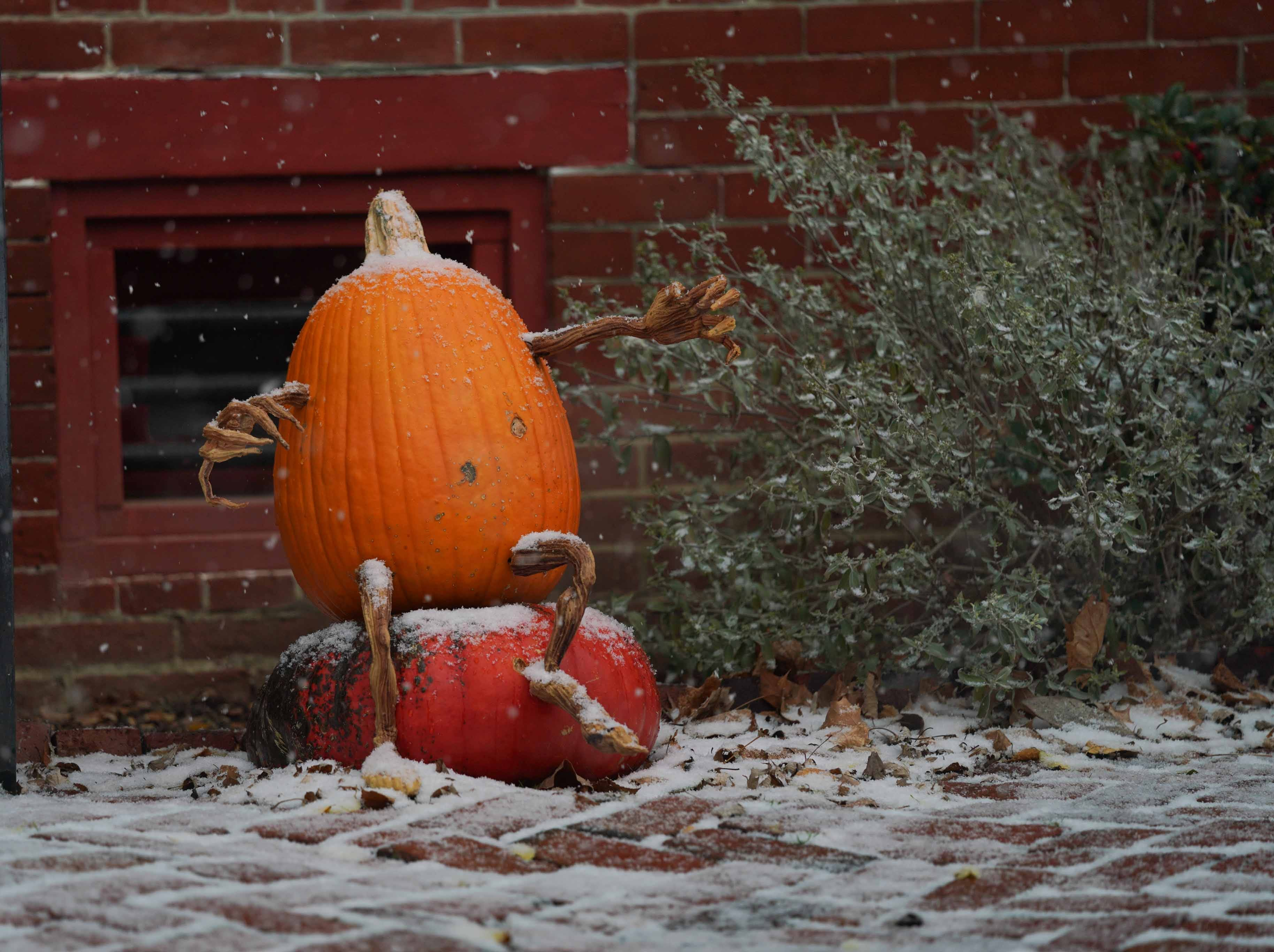 A fall pumpkin gets a coating of snow in Old New Castle on Thursday morning.