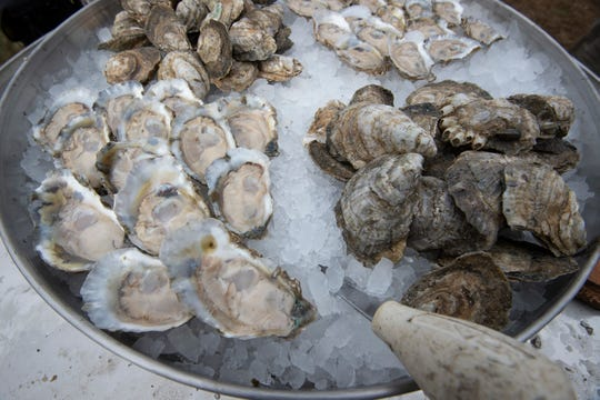View of oysters and shelled oysters.