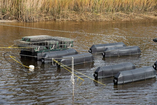 Mark Casey of Delaware Cultured Seafood has a variety of equipment and techniques to help hopeful shellfish farmers get started. He also has baby oysters growing, too.