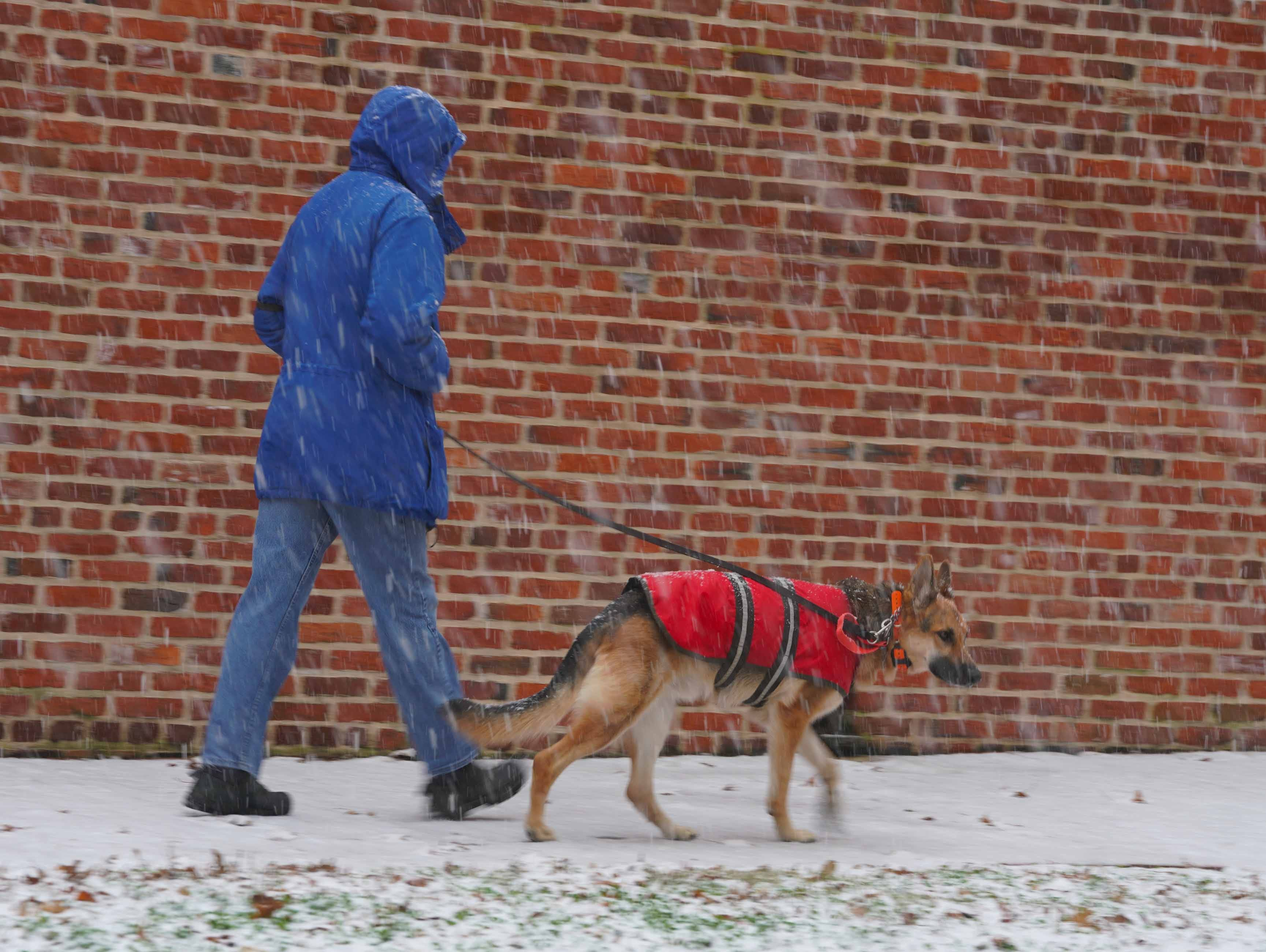 A man walks in his dog in the snow fall in Old New Castle on Thursday morning along E. Third St.