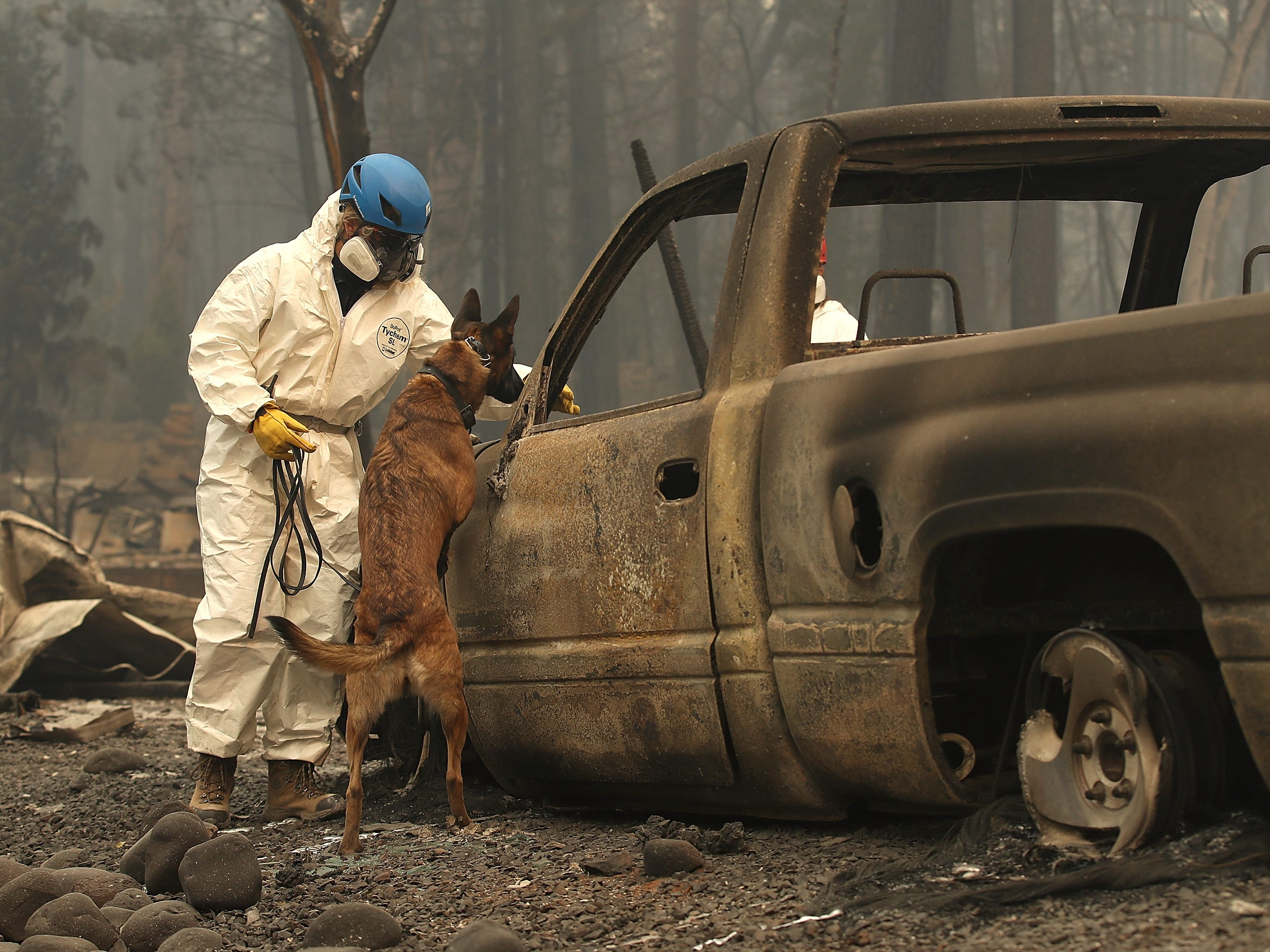 A rescue worker uses a cadaver dog to search for human remains at a mobile home park that was destroyed by the Camp Fire on Nov. 14, 2018 in Paradise, Calif.