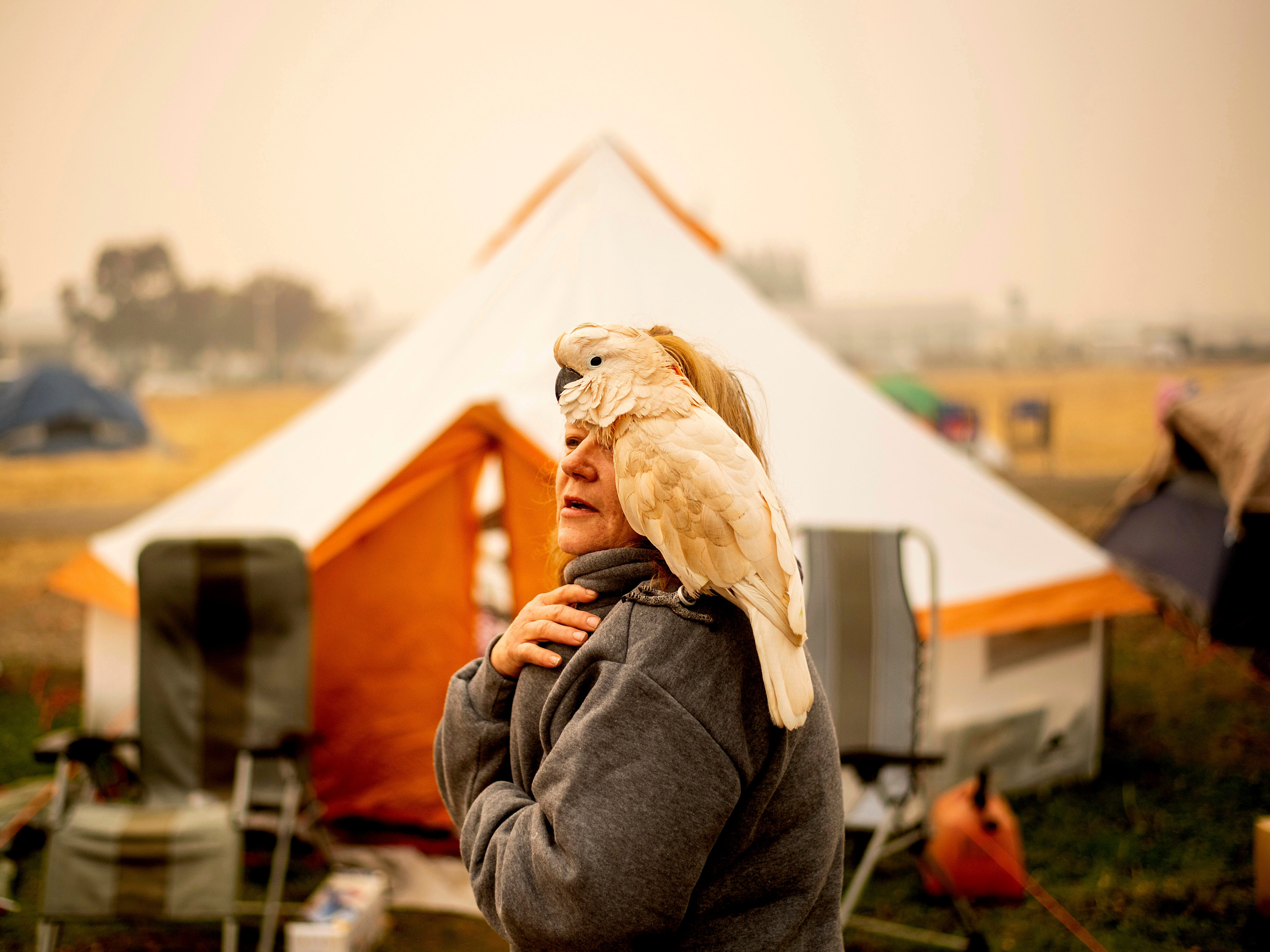 Suzanne Kaksonen, an evacuee of the Camp Fire, and her cockatoo, Buddy, camp at a makeshift shelter outside a Walmart store in Chico, Calif., on Nov. 14, 2018. Kaksonen lost her home in the blaze.