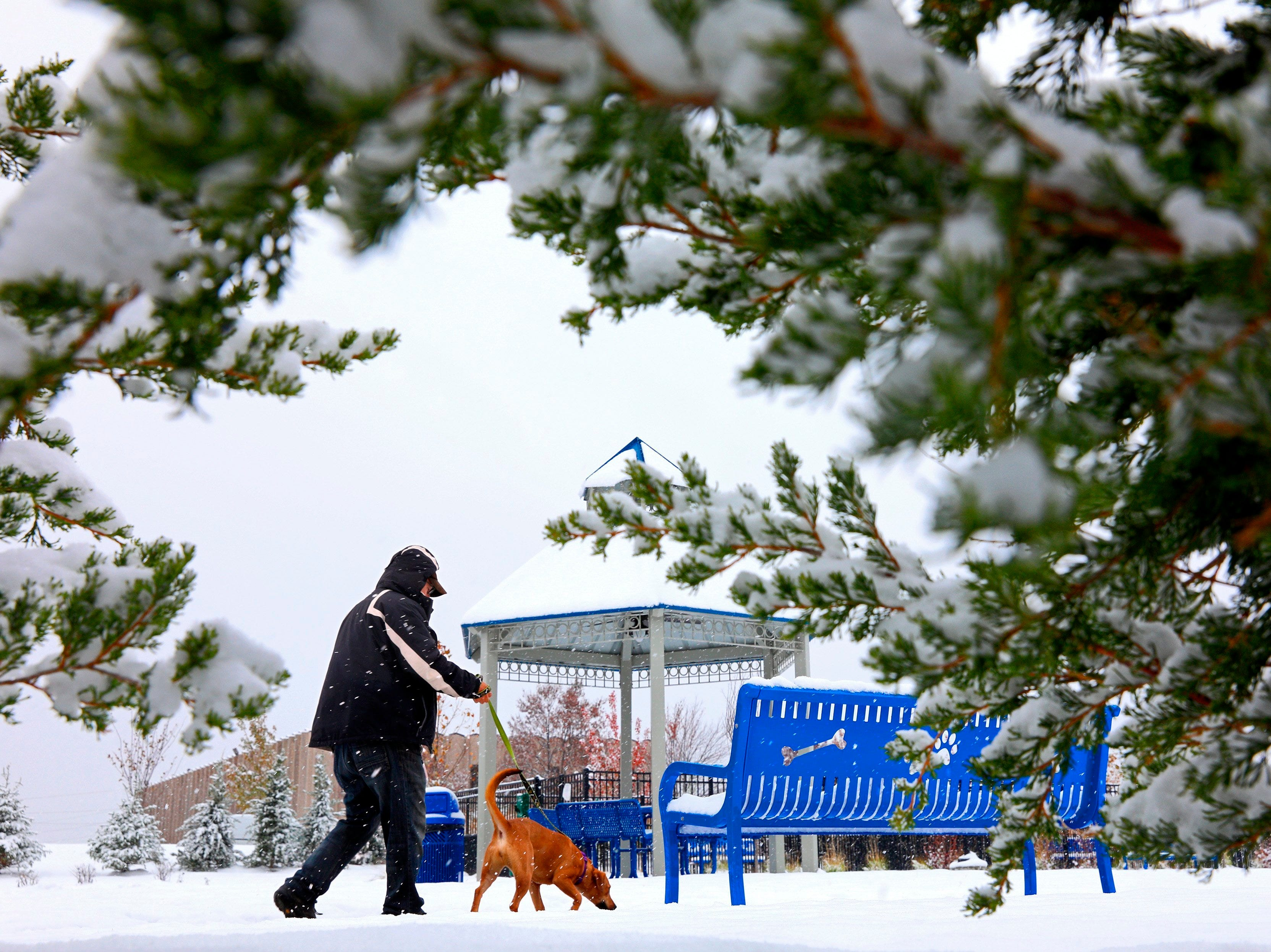 Joe Harrison, a volunteer dog walker, gives Haley a wintry outdoor walk on Thursday, Nov. 15, 2018, in the walking park at the Humane Society of Missouri's Maryland Heights center. A pre-winter storm moved across the eastern half of the country Thursday, slamming parts of the South and lower Midwest on the way.