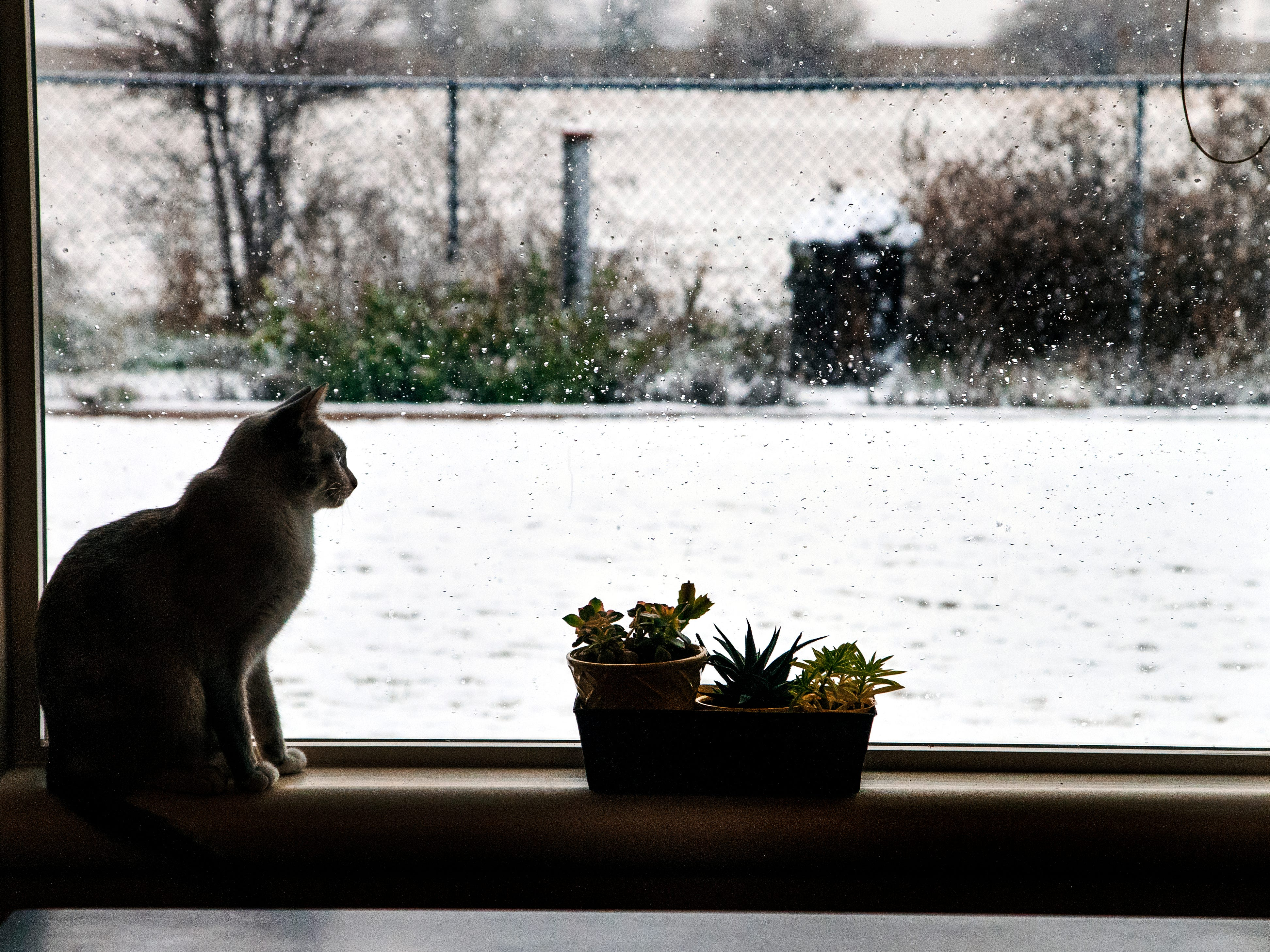 A cat sits in a window watching the snow fall as a winter storm hits the area in Oklahoma City, Okla. on Monday, Nov. 12, 2018.