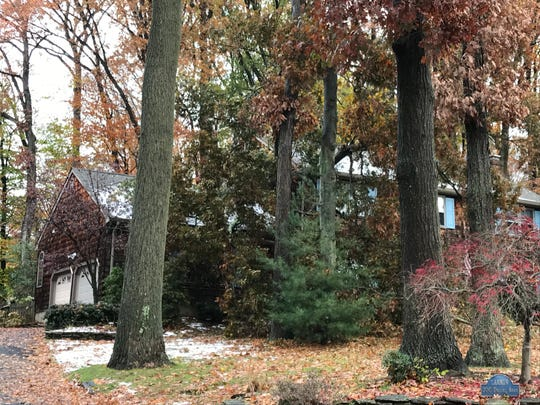 A tree crashed onto a Dwight Road home Friday morning.